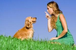 dog training command